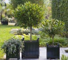 Versailles Planters - www.classic-garden-elements.co.uk - Versailles Planters Planters Versailles Seater Corner Planter