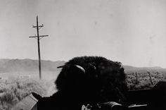 """Bernard Plossu    """"Nouveau Mexique, 1978""""    Tirage argentique  24cm x 30cm"""