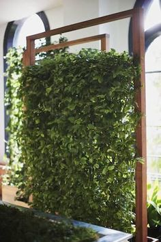 Vertical green wall - great for a natural privacy screen. Really needed on my new balcony
