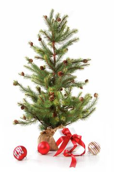 little christmas tree with red ribboned gifts on white - Little Christmas Tree