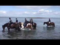 Horseriding in the Burren is one of the highlights of visiting Cooper's Hill Equine in Galway, Ir. Time Travel, Us Travel, Riding Holiday, Beach Rides, Horses For Sale, Show Jumping, Cob, Horse Riding, Trekking