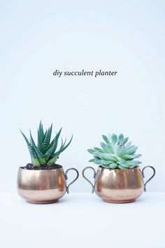 We're crazy for succulents and these super creative and unique ways to decorate them: check out 12 of our favorite ideas you can DIY with plants from our greenhouses. Indoor Planters, Diy Planters, Planter Pots, Succulents In Containers, Cacti And Succulents, Succulent Planter Diy, Succulent Ideas, Office Plants, Garden Pots