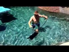 """Scottsdale dog training """"k9katelynn"""" teaches """"Max"""" Yorkshire terrier how to…Scottsdale dog training """"k9katelynn"""" teaches """"Max"""" Yorkshire terrier how to swim at grayhawk  subdivision in Scottsdale,az with out owner getting wet! See more about Tempe dog training at K9katelynn.com! See more on Pinterest with over 20,200 followers! Google plus with over 136,000 visits"""