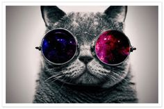 #saturday #vibes  #coolcats #vibing #goodvibes #saturdayinspo #itstheweekend #weekendshere #sunnies #cool #cat #britishshorthair #picoftheday #followforfollow #fblogger #blog #newcomer #fashionista #styleblogger #pearlsandvagabonds