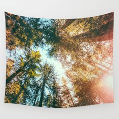 California Redwoods Sun-rays and Sky Wall Tapestry...would be awesome on a ceiling or a canopy bed!