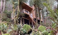 Treehouse Vacations, Beautiful Tree Houses, Small Refrigerator, Gold Beach, Forest View, Forest Floor, Oregon Travel, Common Area, Lodges