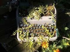Typewriter Planter Typewriter, Ladder Decor, Landscaping, Planters, Interior Design, Cool Stuff, Color, Home Decor, Design Interiors