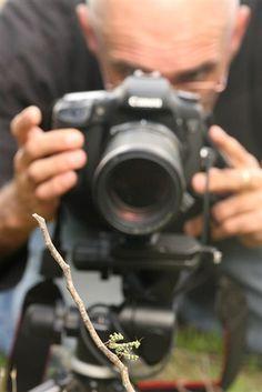Macro photography: Understanding magnification