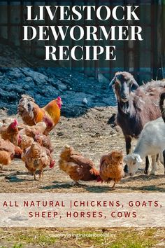 Here's a recipe for a livestock dewormer recipe. Deworm your animals with these natural ingredients. For chickens, goats, sheep, horses, cows and other animals. How to make your own dewormer for farm animals. #dewormer #livestock #animaldewormer #recipe #farm #selfsufficiency Livestock, What To Feed Rabbits, Country Life, Country Living, Sheep, Goats, Herbalism, Raising Farm Animals, Raising Backyard Chickens