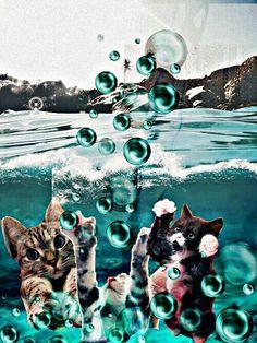Cat swim Swimming, Cats, Painting, Swim, Gatos, Painting Art, Paintings, Cat, Kitty