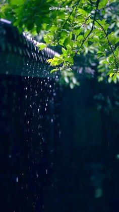 Green Background Video, Green Screen Video Backgrounds, Light Background Images, Photo Background Images, Beautiful Photos Of Nature, Beautiful Nature Wallpaper, Nature Photos, Amazing Nature, Rain Photography