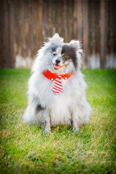 DONNING DOG APPAREL