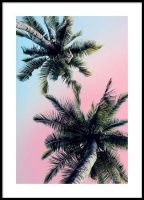 Pastel palm sky Julisteet
