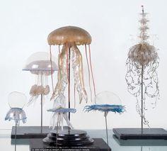 glass models of jellyfish by Blaschka