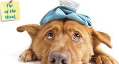Best Dog Illness symptom checker
