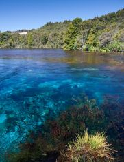 Te Waikoropupu Springs, Golden Bay, New Zealand stock photo Nelson New Zealand, Royalty Free Images, Scenery, Stock Photos, Water, Pictures, Photography, Outdoor, Gripe Water