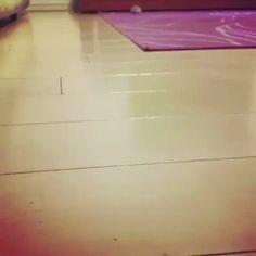 Hamster breaking