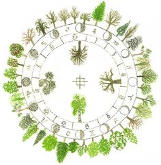 Celtic Tree Horoscope-  ~By Annie B. Bond.  https://www.facebook.com/photo.php?fbid=286378121470637=a.273870869388029.55848.273867192721730=1=nf