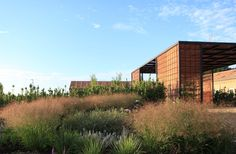 LAS TENADAS, FERNANDO MARTOS Plant Design, Garden Design, Dry Garden, Formal Gardens, Landscape Design, Art Photography, Backyard, Exterior, Outdoor