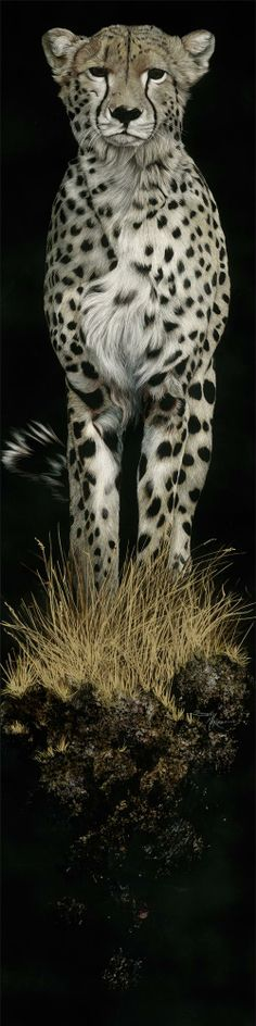 """Night Stalker by Sally Maxwell. """"All of the cheetahs I've seen are in preserves in South Africa, so I have not been able to view their true nature. They still are one of the most elegant of the cats and hunt both day and night for the next meal, unless they live in captivity and are fed..."""""""