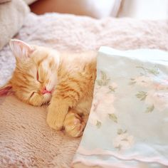 This orange tabby kitten is all tucked in for a nice snooze. Cute Baby Cats, Cute Cats And Kittens, Cute Funny Animals, Cute Baby Animals, I Love Cats, Crazy Cats, Baby Kitty, Funny Cats, Kittens Cutest Baby