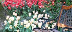 Primavera in Toscana in viaggio sulle Strade dei Fiori