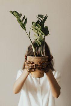 Die 10 besten Geschenkideen für Pflanzenliebhaber! Egal ob zu Weihnachten oder zum Geburtstag, hier wird jeder fündig! Lightroom, Photoshop, Plant Wall, Plant Decor, Zz Plant, Potted Plants, Indoor Plants, Garden Plants, Plants Are Friends