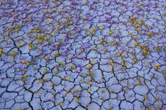 Gorgeous Photographs Of A Desert Exploding With Brilliant Color