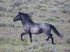 Cavalos formidáveis (20)
