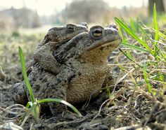Kiss me ,hold me baby :), via Flickr.