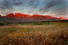 Rooibos: The Flavor of South Africa Ultimate Travel, Africa Travel, Travel Deals, Live, Places To See, South Africa, Tourism, Landscape, World