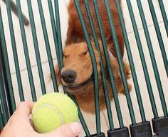 Must.......Get....... Ball!