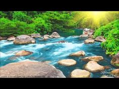 Relaxing Nature Sounds - Water Sound 24 Hours, Gentle River & Stream - YouTube