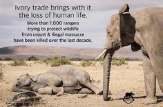 More than 1,000 rangers trying to protect wildlife from unjust and illegal massacre have been killed over the last decade.