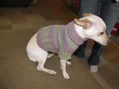 Small Dog Sweater by Brian Herzog, free pattern on Ravelry. Instructions are very clear and exceptionally well written.