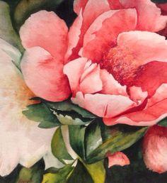 Rose Beauty, Watercolour, Elizabeth Little