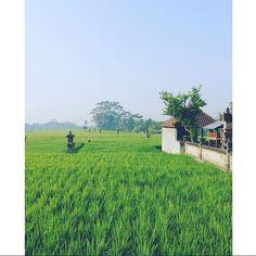 #ubud #bali Ihana aamun tyyni hehku, kiitos tägäyksestä @travelinggentleman #mondolöytö  #mondolehti