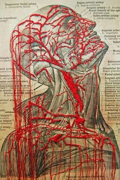 ARTIST NOT LISTED Image of human anatomy stitched into to suggest muscular definition and bloodflow.