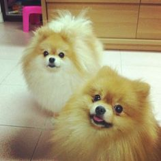 Identical twin to my Rascal Boy ................. the back one.