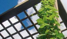 Terrassetakene som forlenger sommeren - Byggmakker.no Plant Leaves, Pergola, Plants, Terrace, Plant, Arbors, Planting, Planets