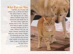 """And also while we are on the """"seeing-eye"""" topic, let's talk just real quicklike about this seeing-eye cat who see-eyes for a labrador out of the great and glorious goodness of her heart. 