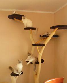 Katzen Kratzbaum bauen                                                                                                                                                     Mehr
