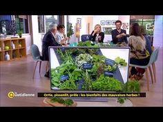 Ortie, pissenlit, prêle : les bienfaits des mauvaises herbes - YouTube Gardens, Growing Weed, Dandelion, Herbs, Recipes