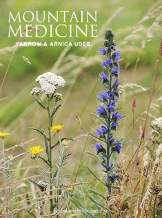 Natural Home Remedies Mountain Medicine- Using Arnica and Yarrow - Yarrow and arnica tinctures and oils are great mountain medicine remedies to add to your first aid kit. Knowing how to use them is incredibly empowering! Natural Health Remedies, Natural Cures, Natural Healing, Herbal Remedies, Natural Treatments, Natural Foods, Cold Remedies, Natural Beauty, Natural Oil