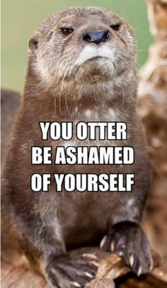 You otter be ashamed of yourself.