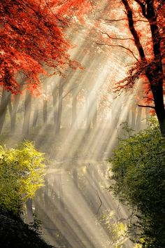 Beautiful Nature Forest Photography by Lars van de Goor All Nature, Amazing Nature, Nature Water, Nature Tree, Pretty Pictures, Cool Photos, Red Pictures, Beautiful World, Beautiful Places