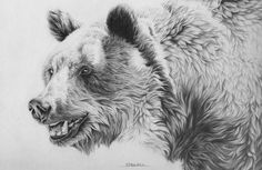 Grizzly bear free drawing patterns to trace image search results Animal Sketches, Animal Drawings, Pencil Drawings, Drawing Animals, Ours Grizzly, Grizzly Bears, Grizzly Bear Drawing, Bear Sketch, Bear Paintings