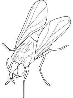 Insekten Malvorlagen