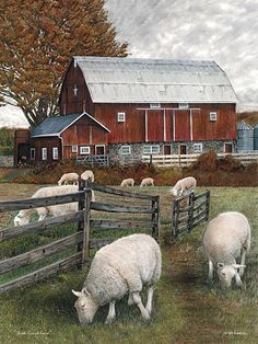 sheep and red barn