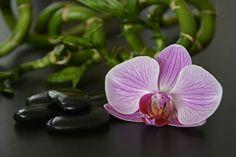 Klinika Anna Pikura poleca: Masaż gorącymi kamieniami całego ciała! – tylko 200 zł za 60 minut relaksującej przyjemności! http://annapikura.com/kosmetologia_masaze.html